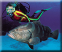 Scuba Diving Charters key west reef and wreck diving