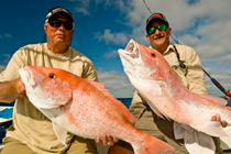 Red Snapper Dry Tortugas